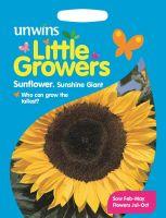 Little Growers Sunflower Sunshine Giant