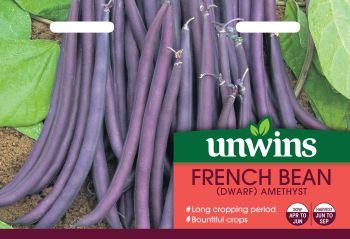 French Bean (Dwarf) Amethyst