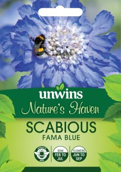 NH Scabious Fama Blue