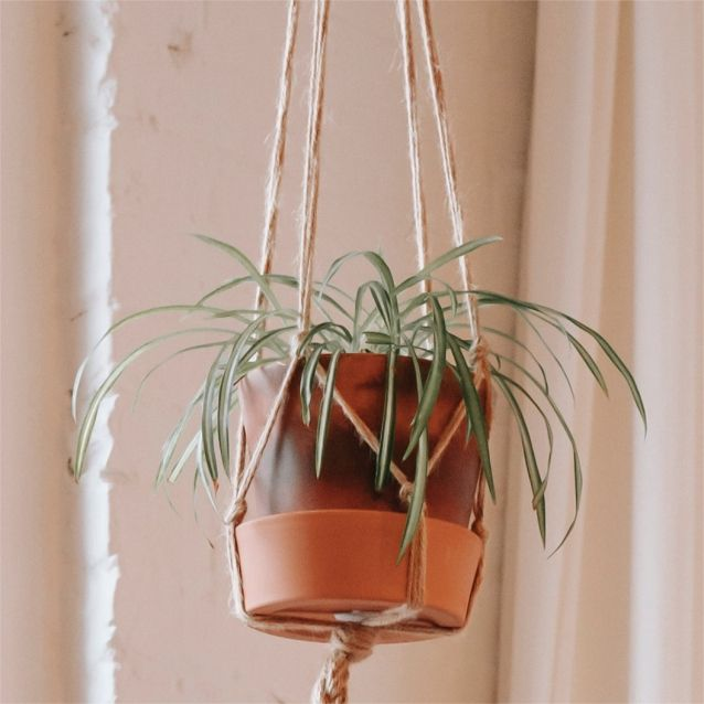 HANGING HOUSEPLANTS
