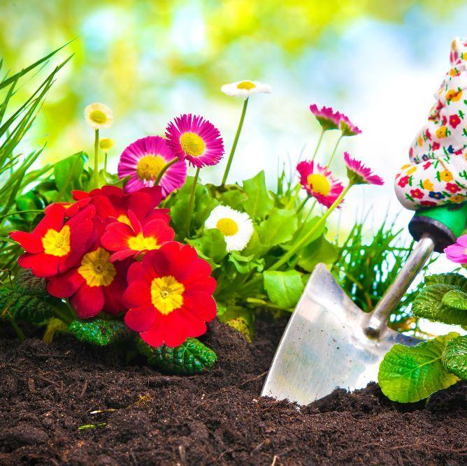 All Flowering Seed