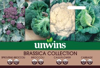 Brassica Collection Pack