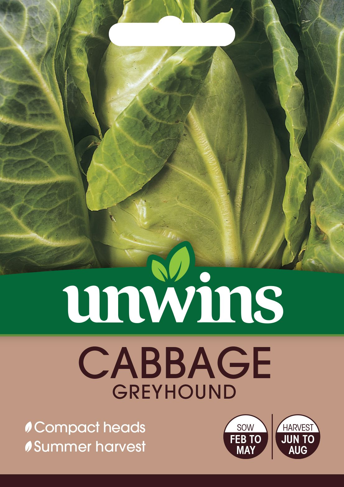 Cabbage (Pointed) Greyhound