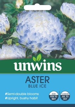 Aster Blue Ice