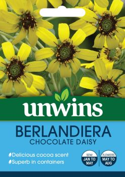 Berlandiera Chocolate Daisy