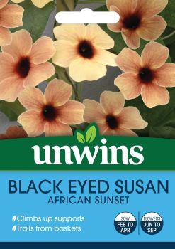 Black Eyed Susan African Sunset