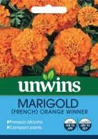 Marigold French Orange Winner