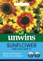 Sunflower Firecracker F1