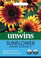 Sunflower Jammie Dodger F1