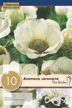 ANEMONE THE BRIDE