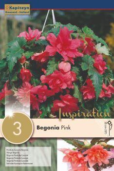 BEGONIA PENDULA CASCADE PINK
