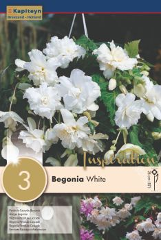 BEGONIA PENDULA CASCADE WHITE