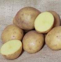 COLLEEN ORGANIC 1st Early  seed potatoes