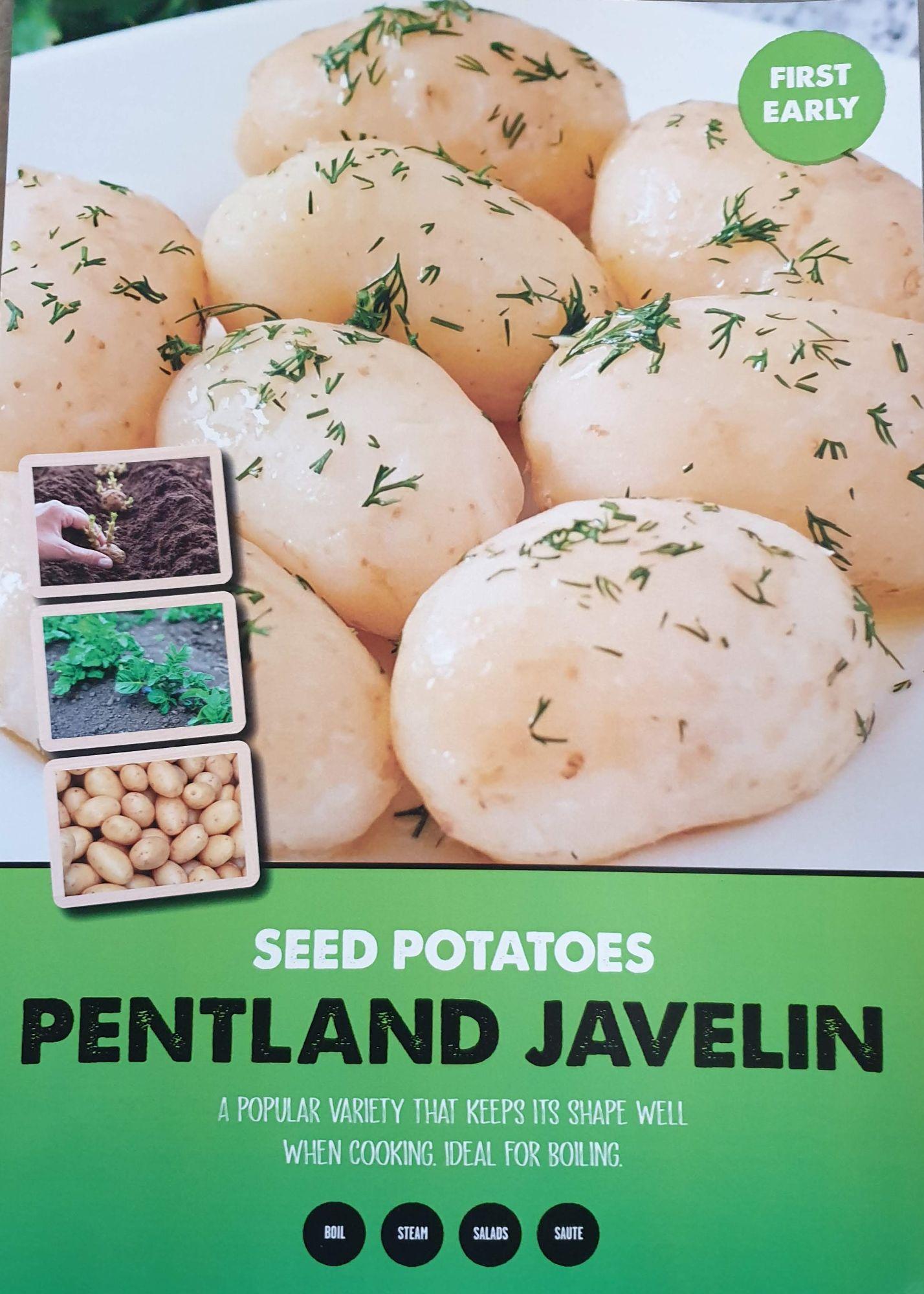 pentland_javelin_seed_potato_info.jpg