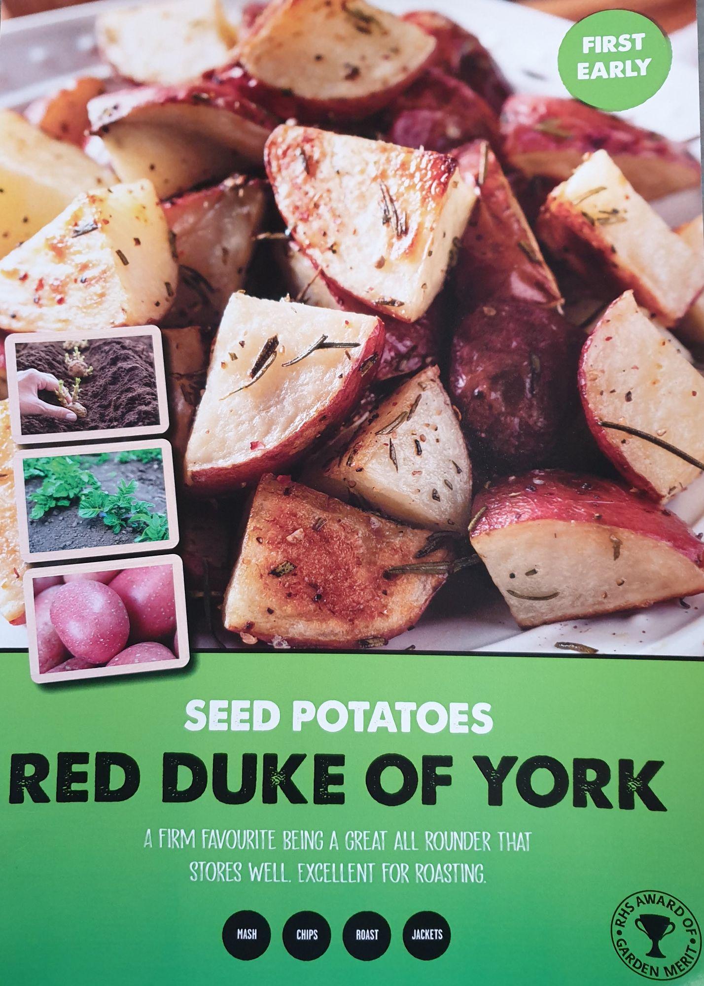 red_duke_of_yorks_seed_potato_info.jpg