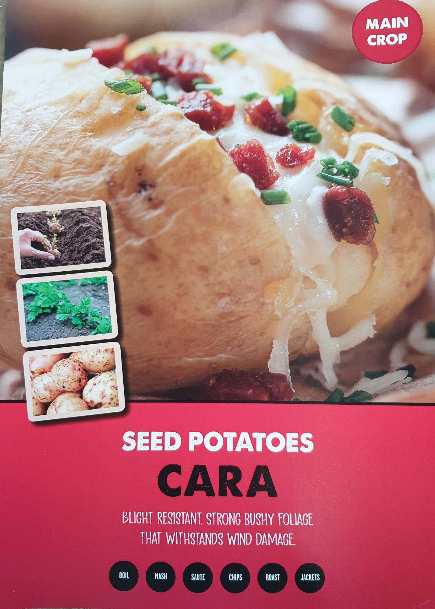 cara_seed_poato_inof.jpg