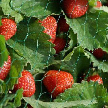 Garden Netting, 15mm, 4x10m, Green