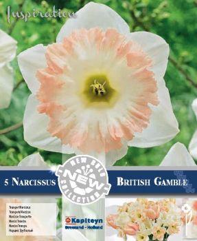 NARCISSUS BRITISH GAMBLE