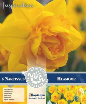 NARCISSUS DOUBLE HEAMOOOR