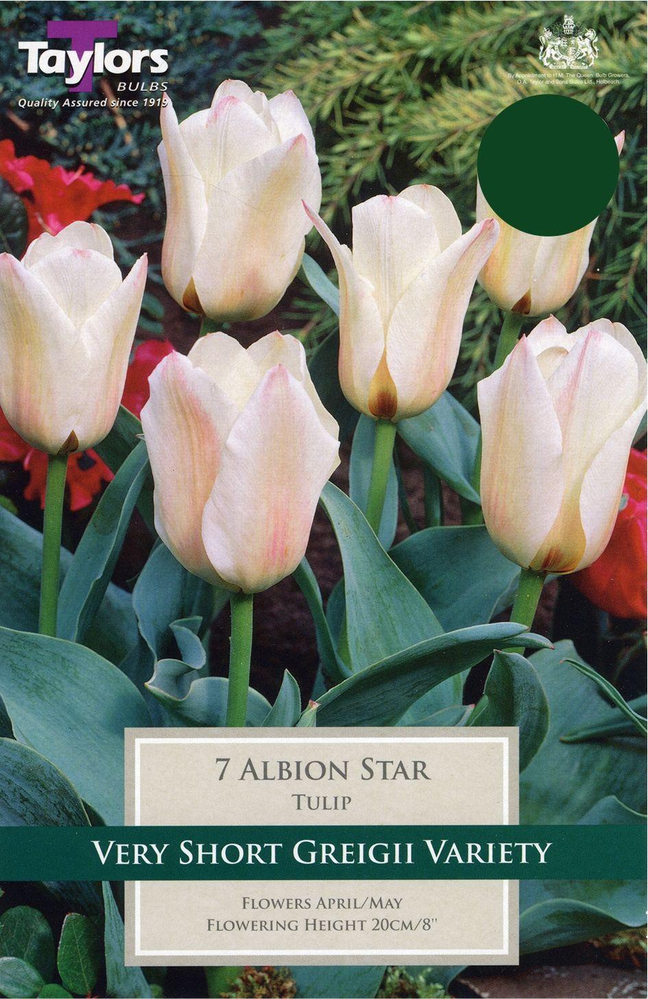 TULIP ALBION STAR