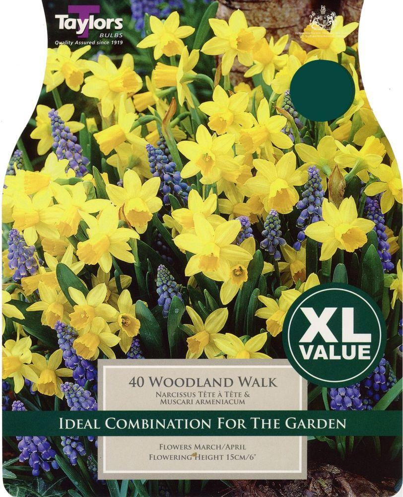 NARCISSUS  WOODLAND WALK -XL - COMBINATION