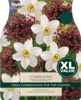 NARCISSUS BIRDS AND BEES - XL - COMBINATION