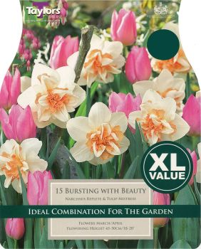 NARCISSUS BURSTING WITH BEAUTY - XL - COMBINATION