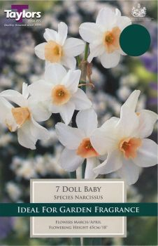 NARCISSUS DOLL BABY