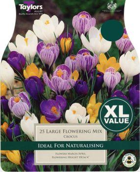 CROCUS LARGE FLOWERING MIXED  XL