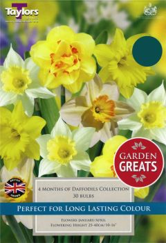 4 MONTHS OF DAFFODILS COLLECTION