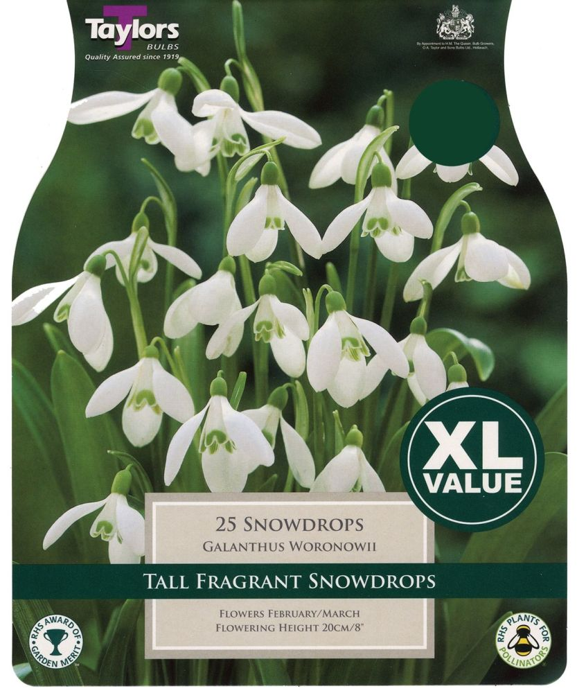 SNOWDROPS XL
