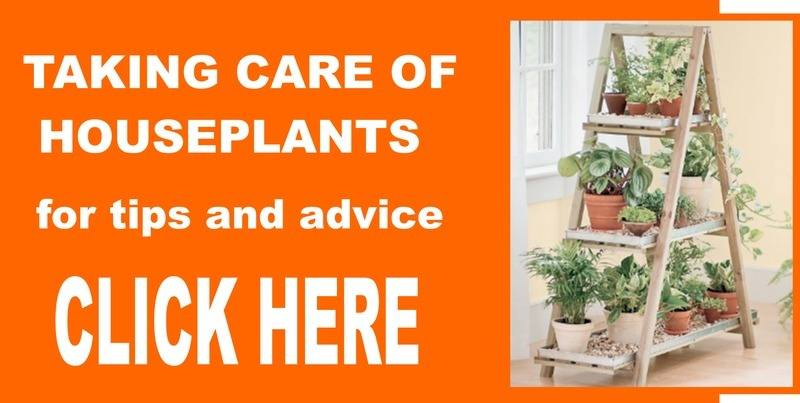taking care of houseplants