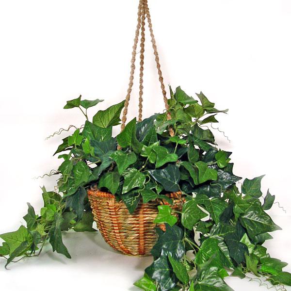 air english ivy