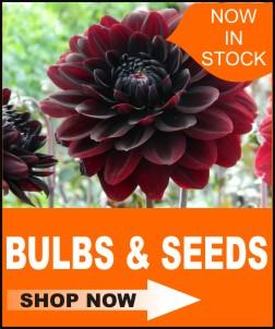 home icon shop bulbs and seeds