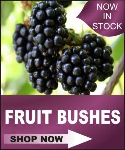 home icon shop fruit bushes