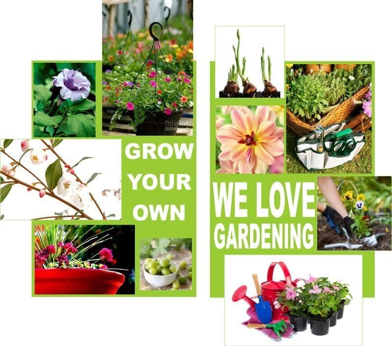 outdoor plants image