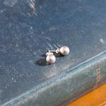 Swarovski Light Grey Crystal Pearls
