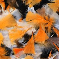 Autumnal Halloween Feathers - Assorted - 50g Bag - Each