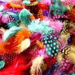 Feathers - Coloured Spotted - Assorted -  28g - Each