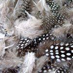 Feathers - Monochrome Spotted - Assorted - 28g - Each