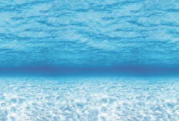 Fadeless Display Roll - Under The Sea - 1218mm x 15m - Each