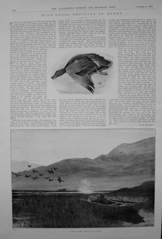 Wild-Goose Shooting in Kerry. 1909