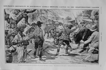 Germany's Difficulty in South-West Africa - Bringing Cattle to the Sharpshooters' Laager. 1905