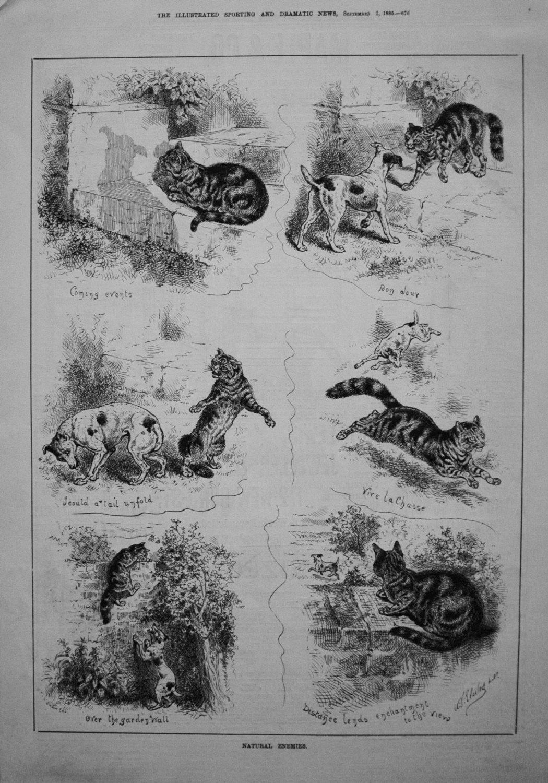 Natural Enemies. 1885