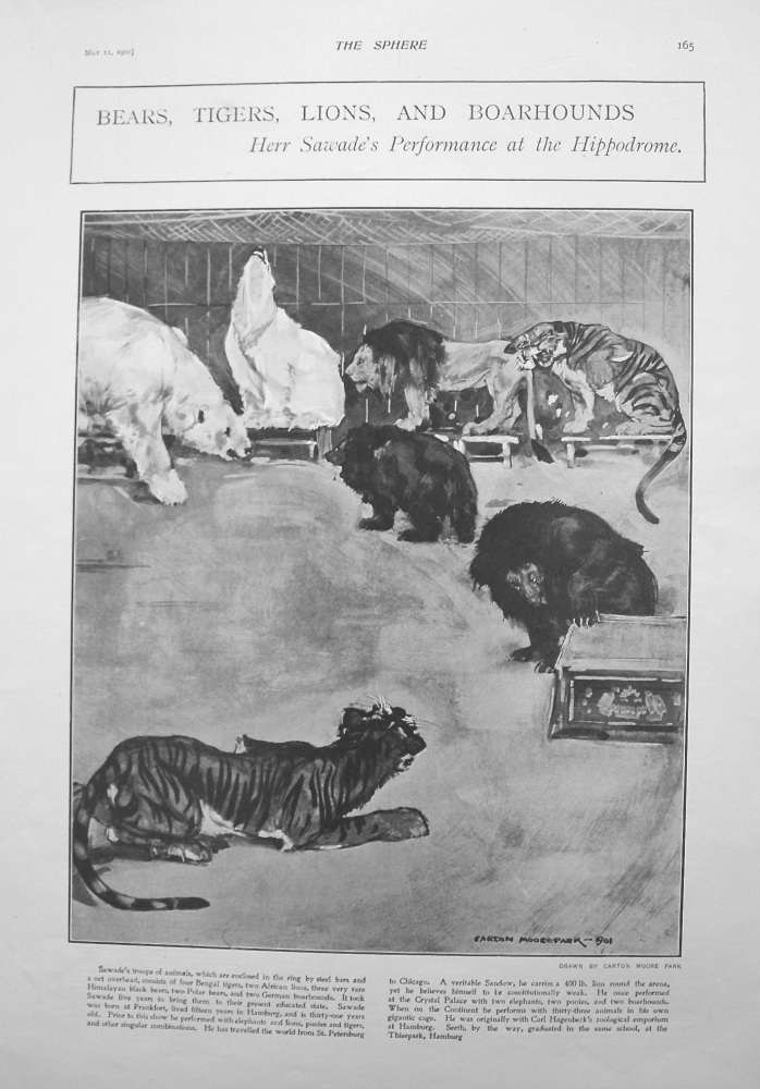Bears, Tigers, Lions, and Hoarhounds. - Herr Sawade's Performance at the Hippodrome. 1901