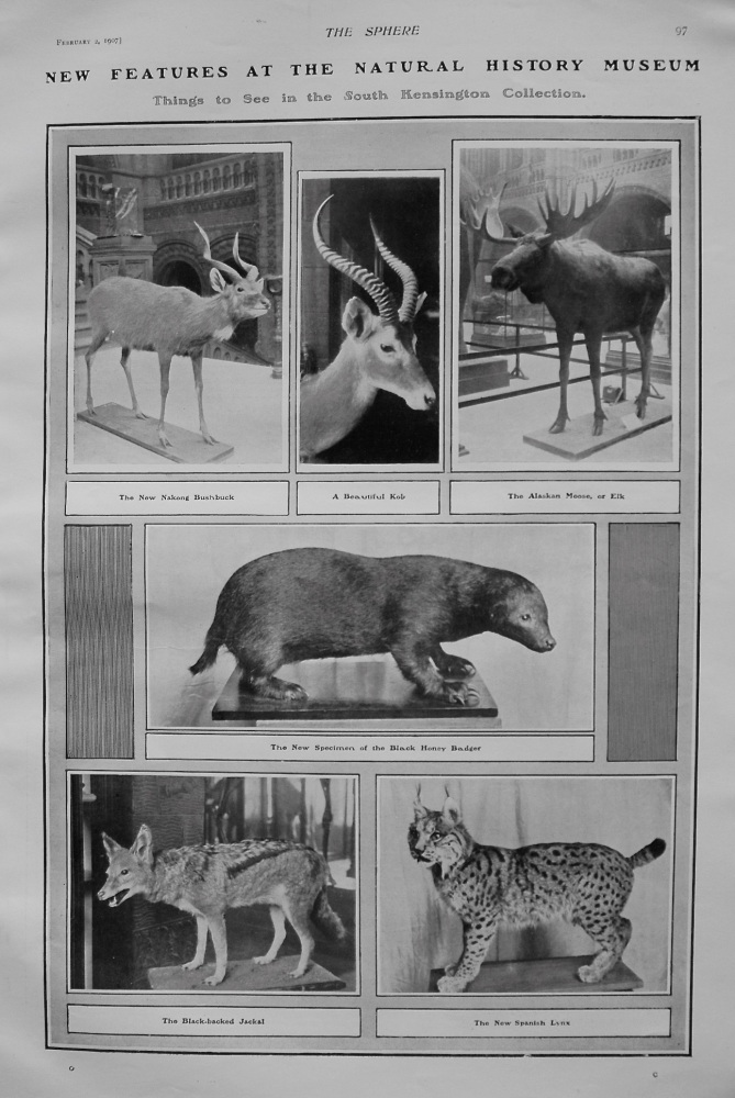 New Features at the Natural History Museum : Things to See in the South Kensington Collection. 1907