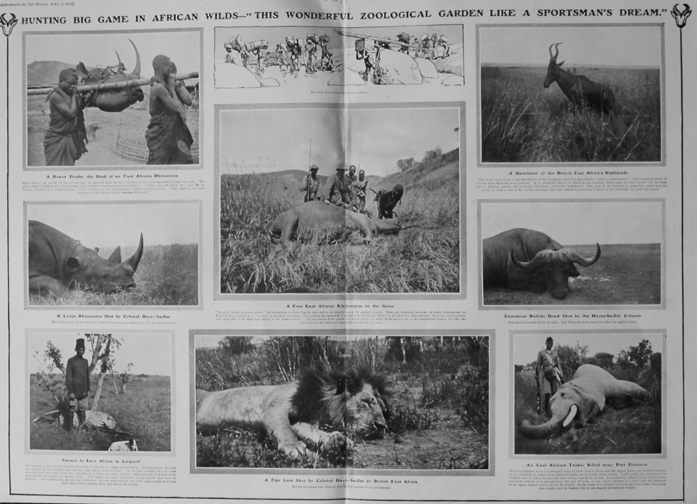 Hunting Big Game in African Wilds. 1907