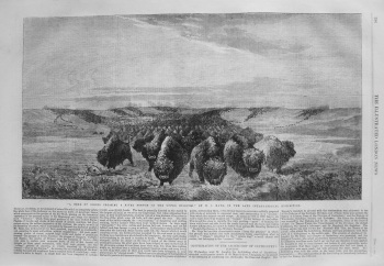 """A Herd of Bisons Crossing a River Bottom on the Upper Missouri,"" in the Late International Exhibition. 1862"