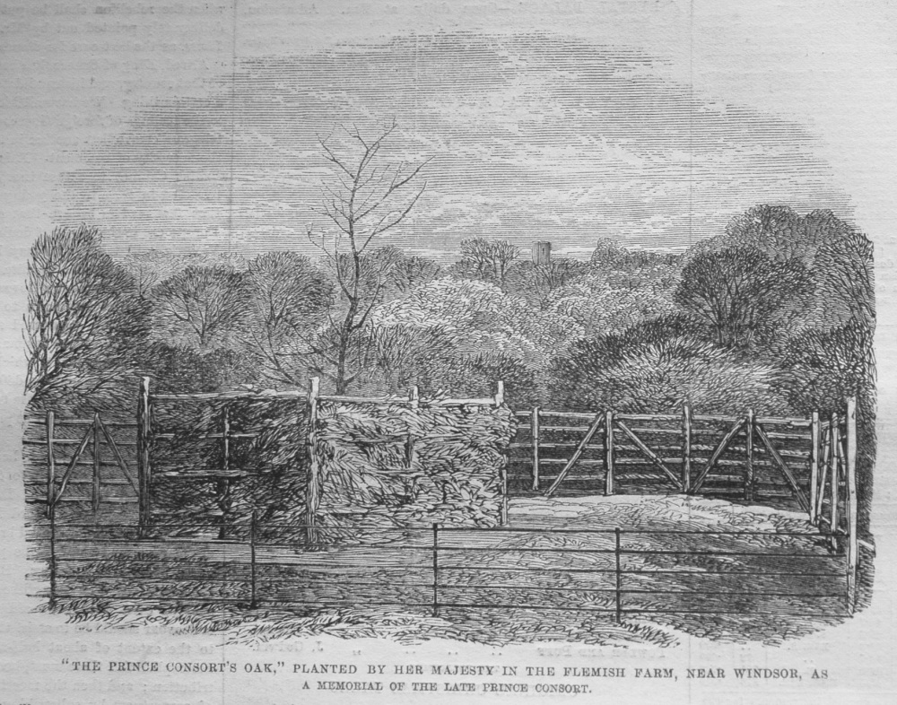 """""""The Prince Consort's Oak,"""" Planted by Her Majesty in the Flemish Farm, near Windsor. 1862"""