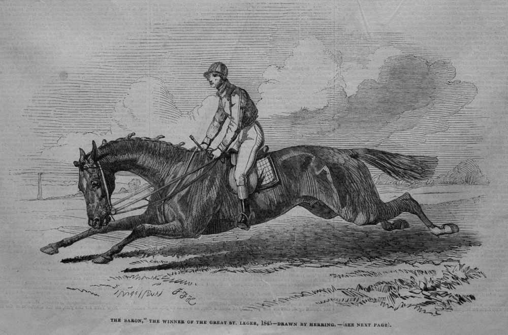 """""""The Baron,"""" the Winner of the Great St. Leger, 1845- Drawn by Herring."""